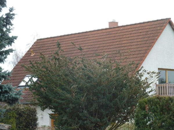 Holzterrasse - Modernisierung - Dachkonstruktion - Balkon