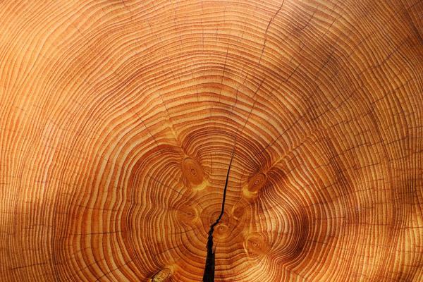 Fichte-Basan Bauwerke aus Holz