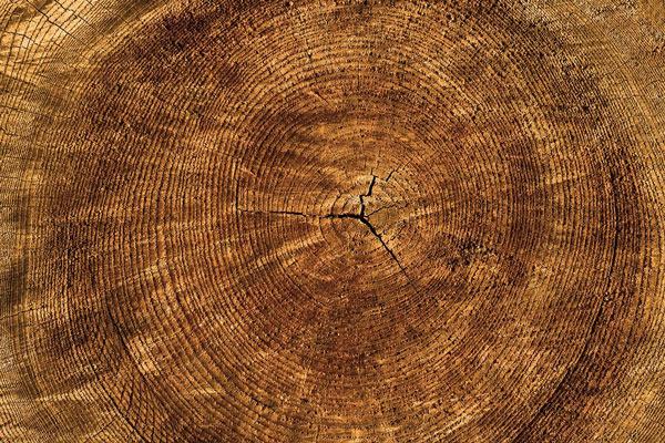 Kiefer-Basan Bauwerke aus Holz